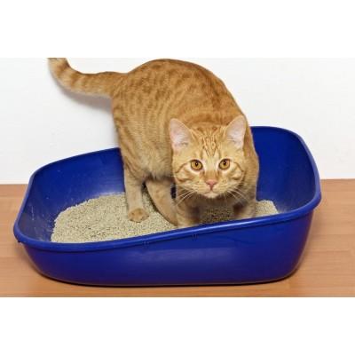 Наполнитель для кошки: какой выбрать?