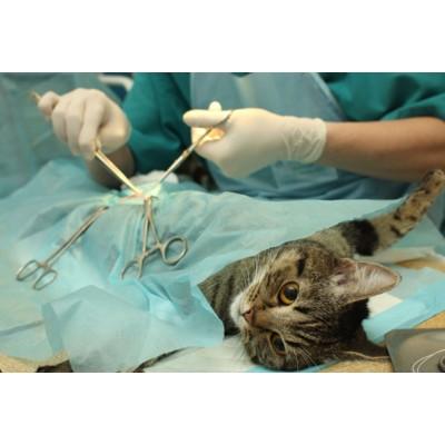 Цены на стерилизацию кошки