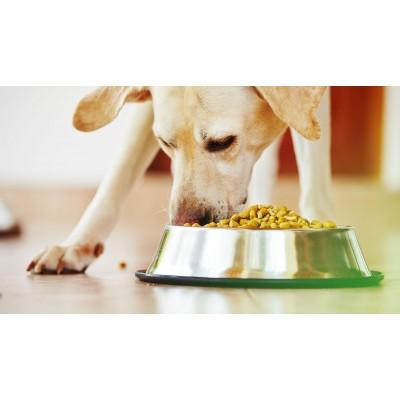 корм для собаки купить в краснодаре, роял канин для собаки краснодар, корм проплан для собаки краснодар,