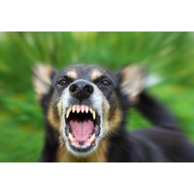 Вакцинация кошки и собаки от бешенства: с какого возраста вакцинировать?