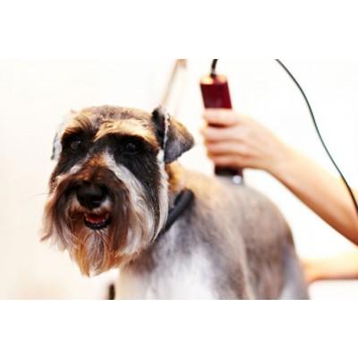 обучение грумингу москва, как стать грумером, курсы по стрижке собак