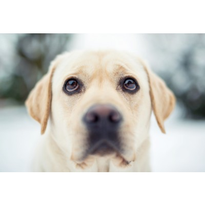 Собаки Сухой корм для собак 1st Choice