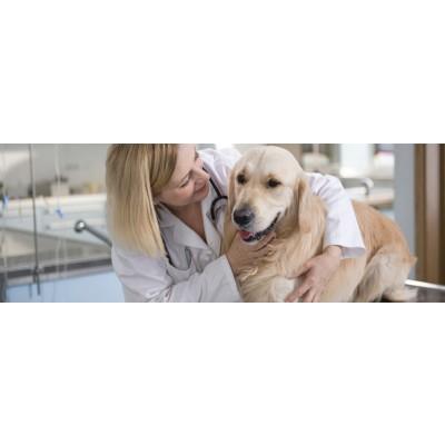 Скорая ветеринарная помощь на дому в Краснодаре