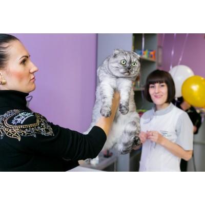 Телефоны и адреса ветеринарных клиник Краснодара