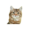 В нашем интернет-зоомагазине вы можете купить корм Роял Канин, Хиллс, Проплан, Джина, Акана для кошек, наполнители, лакомства, товары для гигиены и другое.