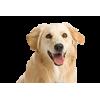 Купить корм Роял Канин, Хиллс, Проплан, Акана, Джина, Дог Чау для собак в интернет-зоомагазине с доставкой