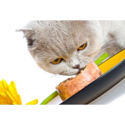 корм для кошек краснодар, купить корм для кошки краснодар, роял канин краснодар, проплан краснодар, акана для кошек