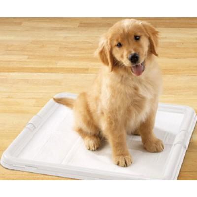 Как приучить собаку к пеленке за несколько дней?
