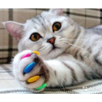 Купить антицарапки для кошек в Краснодаре: нужны ли накладки на когти кошкам?