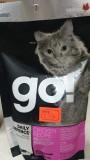 Корм Go! для котят и кошек , , 235 р., Кошки, , Гоу