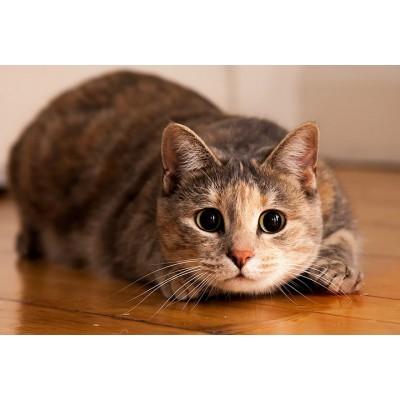 Учимся понимать кошек: звуки, позы и другие знаки.