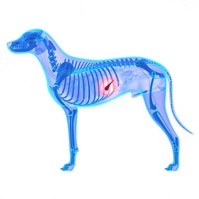 Острый панкреатит у собак: какой корм выбрать?