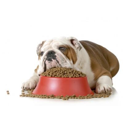 Чем кормить собаку с аллергией?