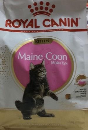 Сухой корм Роял Канин для котят породы мейн-кун в возрасте до 15 месяцев. Также для котят породы сибирская и норвежская лесная.