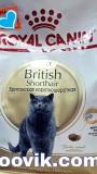 Роял Канин для британских кошек, , 6 400 р., Кошки, Роял Канин, Роял Канин