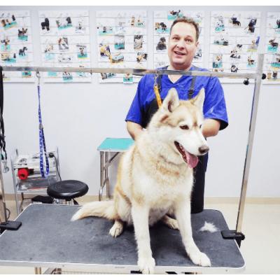 стрижка домашних животных в Москве: в какой салон обратиться?